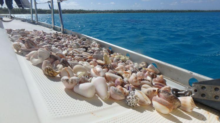 Shells.....